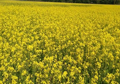 शीकालीन फसलों में सरसों व राई की खेती बेहद लाभकारी, किसान भाई ऐसे करें इसकी खेती